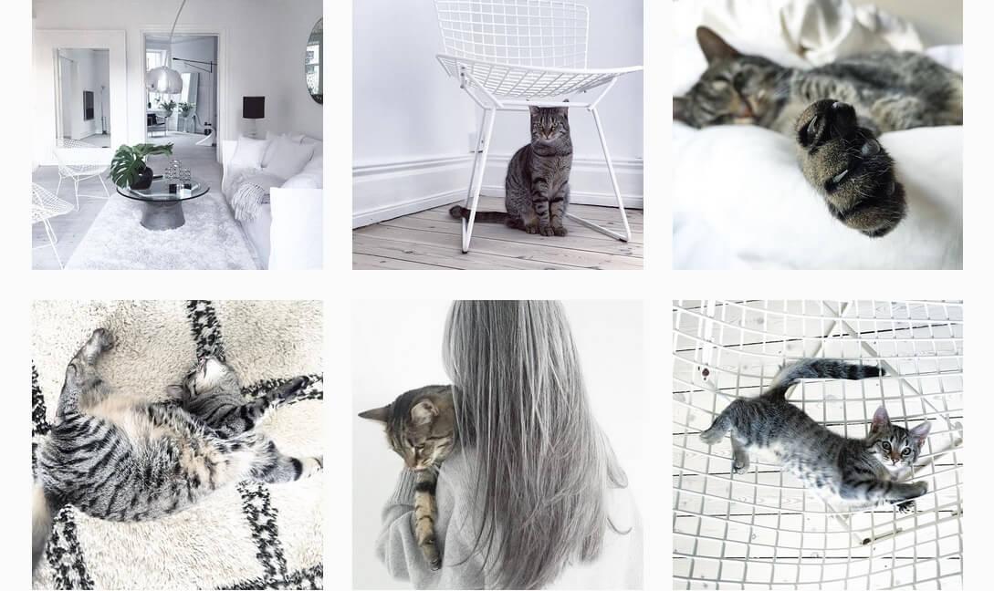 pomysł na profil na instagramie zwierzęta